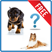 Quiz on breeds of dogs