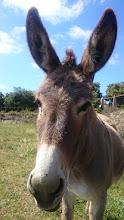 Photo: Donkey!