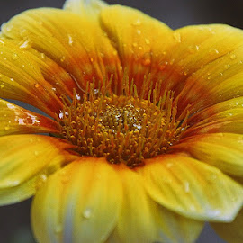 by Sambit Bandyopadhyay - Flowers Single Flower (  )