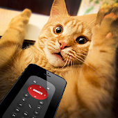 Remote control for cat joke