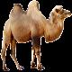 Download Sahara Messenger Free Call For PC Windows and Mac