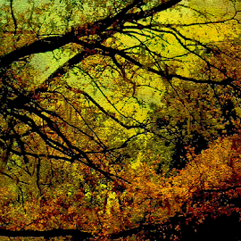 Fall Leaves by Edward Gold - Digital Art Things ( digital photography, red leaves, green leaves, colorful sky, yellow sky, trees, scenic view, digital art, orange leaves,  )