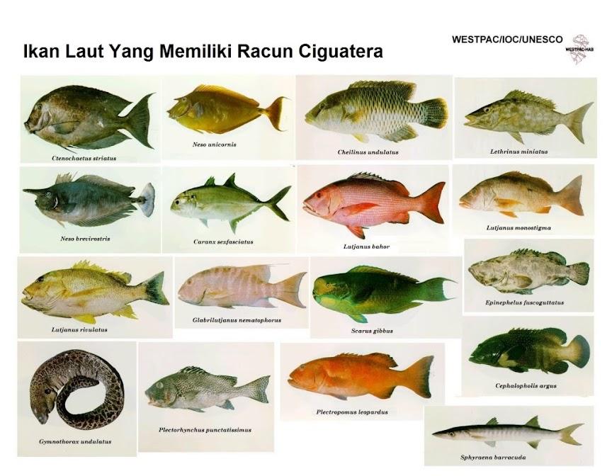 ikan beracun