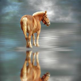 Draft Horse Water Reflection Imaginative by Robin Amaral - Digital Art Animals ( artography, water, reflection, dreamy, heavenly, animal art, horse, clouds and sea, romantic, cloudscape, imagination, draft horse, imaginative, fantasy, atmospheric,  )