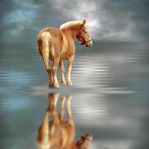 P16-113RA Draft Horse Water Reflection-PIXOTO.jpg