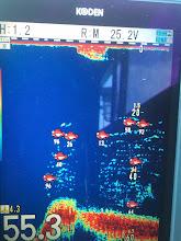 Photo: おおー!魚いるぞー! ガンガンシャクってよー!