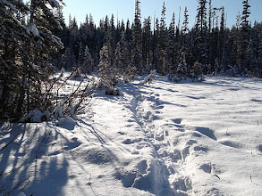 Photo: Bilbos Bog Snow Shoe Trail
