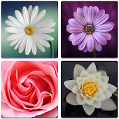 Flower Memory Game For Adults And Kids - Free
