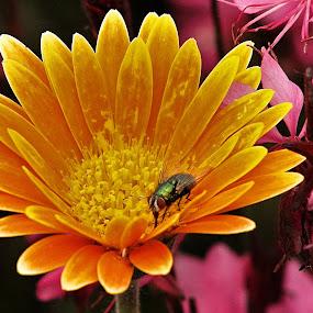 by Tammy Cassford - Flowers Flower Gardens (  )