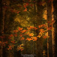 Photo: Spirit Fall