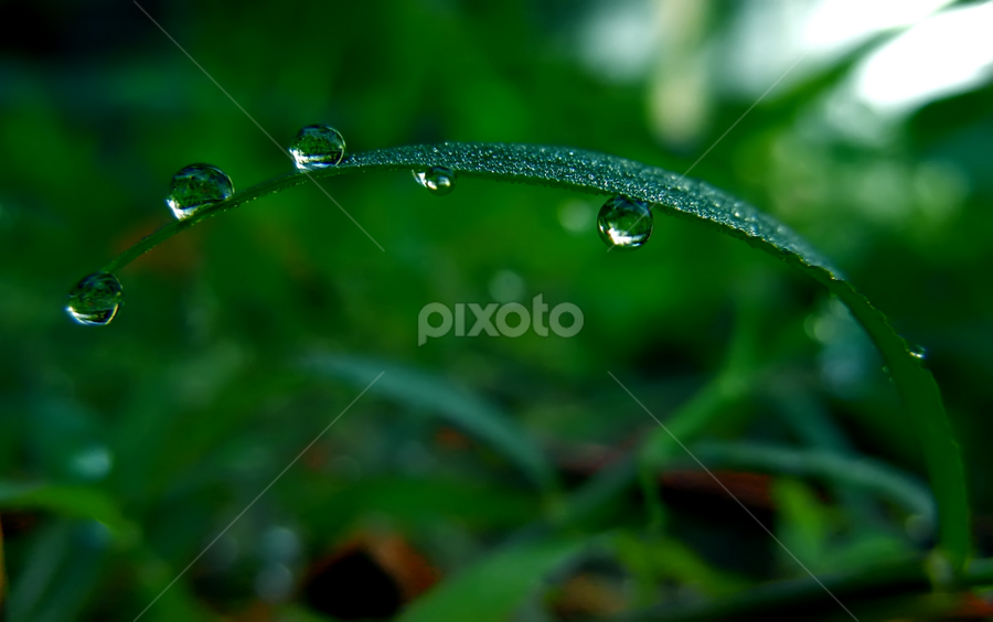 by Lalu Agus Suhardiman - Nature Up Close Leaves & Grasses