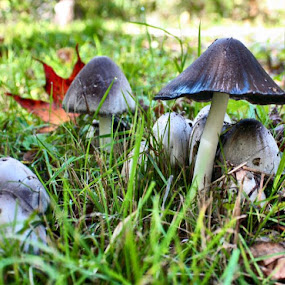 Smurf Village Perhaps by Jillynn Markle - Nature Up Close Mushrooms & Fungi