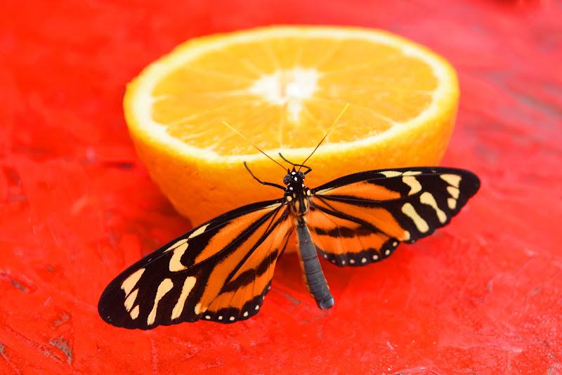 farfalla di irina sirbu
