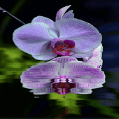 Purple Orchid Flower LWP Android APK Download Free By Daksh Apps