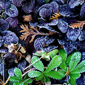 Frozen mint chocolate by Martin Stepalavich - Nature Up Close Other plants