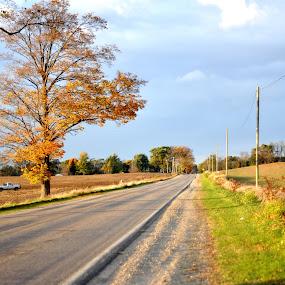 by Colene Draper Anderson - Landscapes Prairies, Meadows & Fields