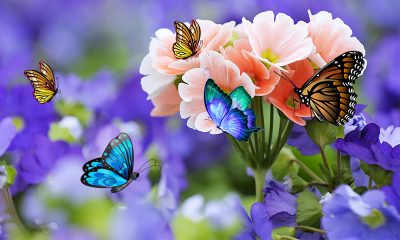 3d butterfly live wallpaper android apps on google play