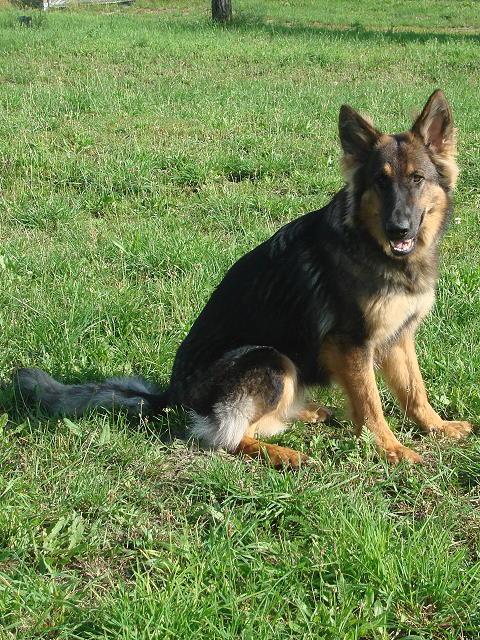 Photo: Inca als jonge hond