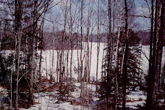 Photo: Looking over the land. Winter 1988-89