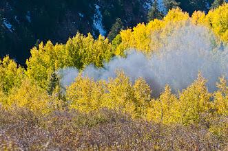 Photo: Train chugs through grove of aspens