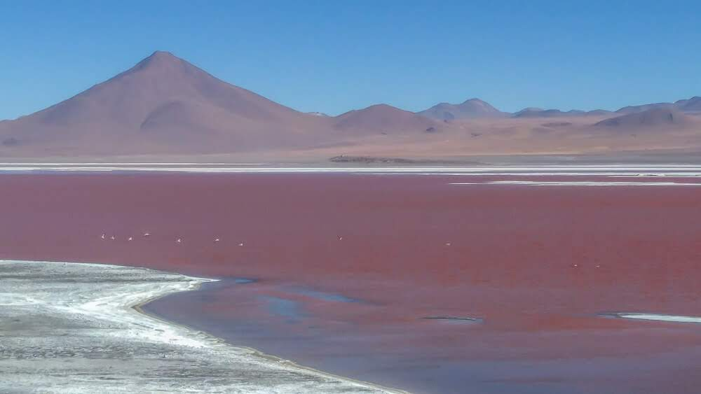laguna colorado in salar de uyuni in bolivia.jpg