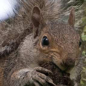 Just Nuts by Damon Hensley - Animals Other