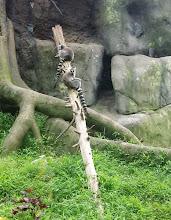 Photo: lemurs