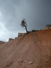 Photo: As the rock erodes, this tree is forced to expose its long roots.