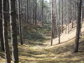 Photo: Culbin Forest, 10 June 2011