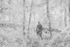 man tussen bomen, gezien door een soort wit web