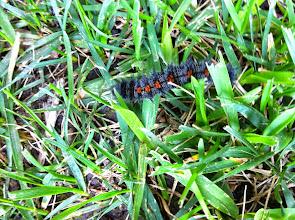 Photo: Caterpillar