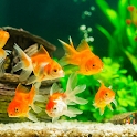Fish On Screen 3D Wallpaper icon