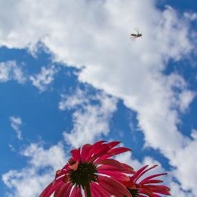by Trent Sluiter - Nature Up Close Flowers - 2011-2013