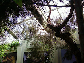 Photo: Our eucalyptus didn't quite look like these, however...