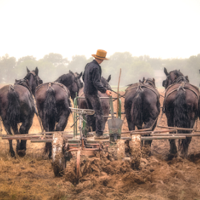 Seven Horsepower by Robert Fawcett - Animals Horses ( farm, amish, horses, pennsylvania, places, travel, lancaster, fields )