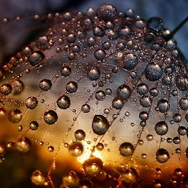 Treasure Of The Sun - 1. by Marija Jilek - Nature Up Close Natural Waterdrops