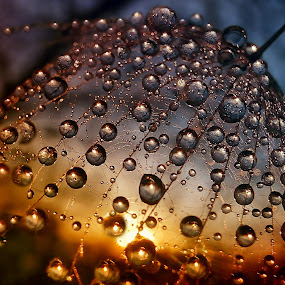Treasure Of The Sun - 1. by Marija Jilek - Nature Up Close Natural Waterdrops