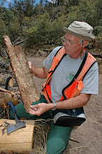Photo: Joe quickly spots the source of Ponderosa Pine mortality -- and the primary reason for our visit -- Western Pine Beetles...