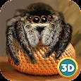 Spider Pet Life Simulator 3D apk