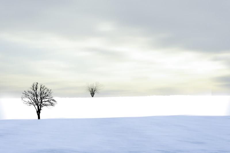 La neve e il suo magnifico silenzio di Saltini Rino