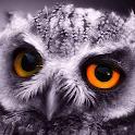 little owl wallpaper icon