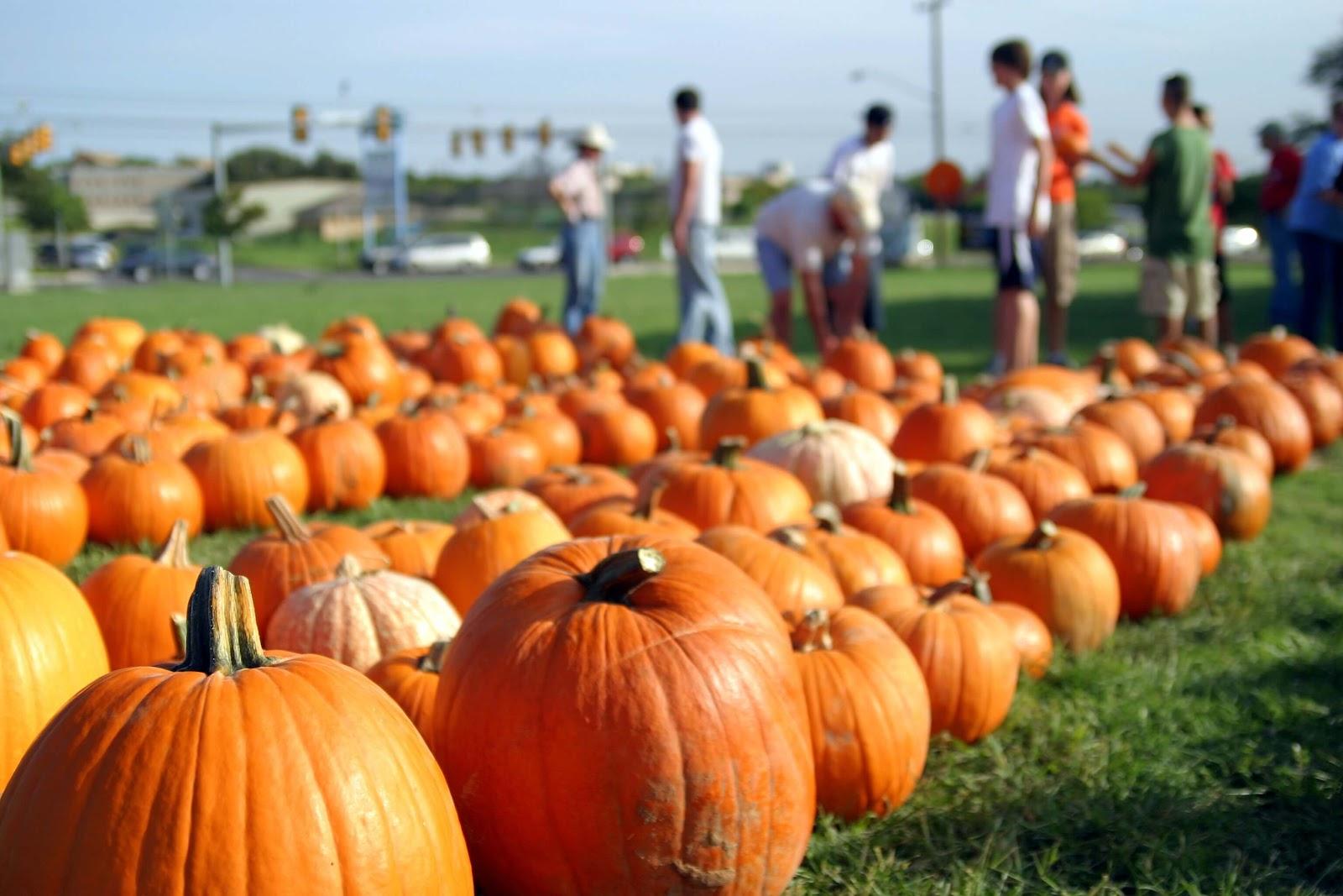 family friendly harvest festival event