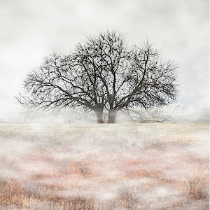 Arkansas Tree in pasture2.jpg