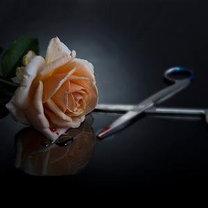 Blood Rose (20 of 42).jpg
