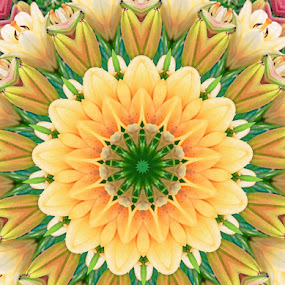 Lily kaleidoscope by Pamela Hammer - Abstract Patterns ( abstract, kaleidoscope, pattern, lilies, flowers )