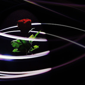 Rose by David Harris - Novices Only Abstract ( light projects, rose, light,  )