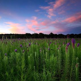 Sunset Cherokee Prairie by William Rainey  - Landscapes Prairies, Meadows & Fields ( prairies, landscapes, flowers, arkansas,  )