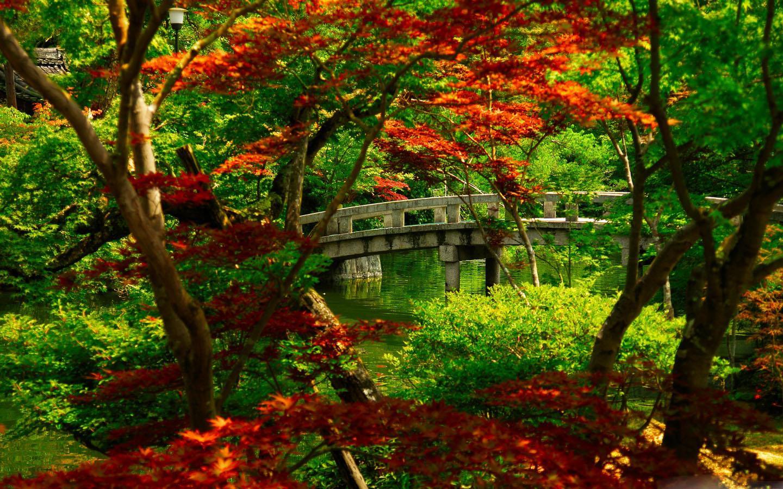 Wallpaper download karne ka app - Nature Wallpapers Screenshot