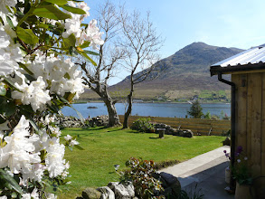 Photo: Springtime in bloom at Kirsty's Cottage