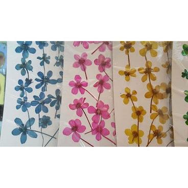 銀蹄蓮 大家岩心水就快d訂啦 手快有手快無😚 $25 per one  #flowers #花 #押花 #押花材料 #pressedflowers #壓花